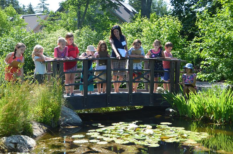 Nature Illustration Camp-Life of a Pond-Ages 7-12