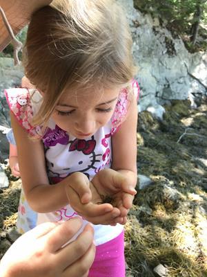 Nature Explorers Camp: Habitat Hunters-Age 4-6