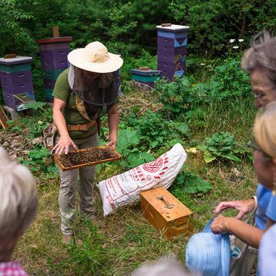 Member Insider Tour: The Bees of CMBG