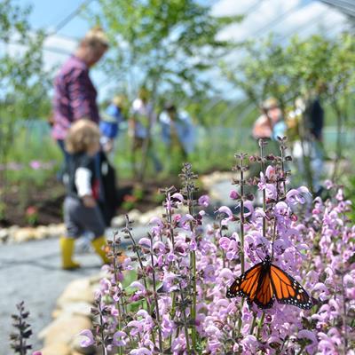 A Maine Butterfly Garden