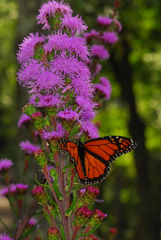 Native Plants for Winged Companions