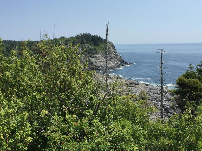 A Beachcomber's Botany: Wild Plants of Monhegan